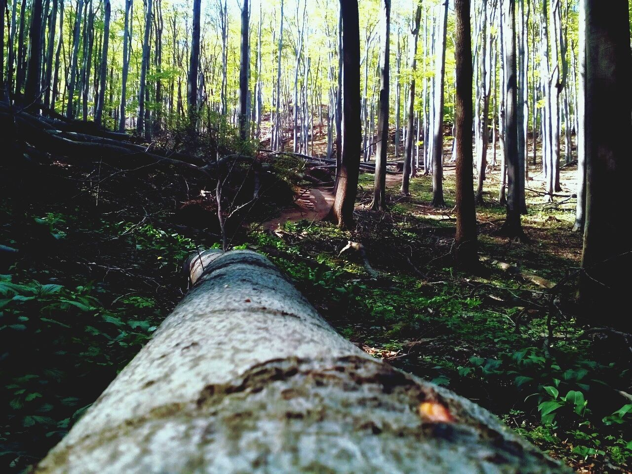 First Eyeem Photo Forest Forest Photography Forest Trees Tree Nature Fallen Tree