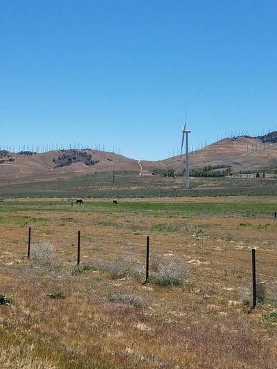 Wind Turbines And Blue Sky Wind Turbines On A Field Wind Turbines Horses In A Field Of Wind Turbines