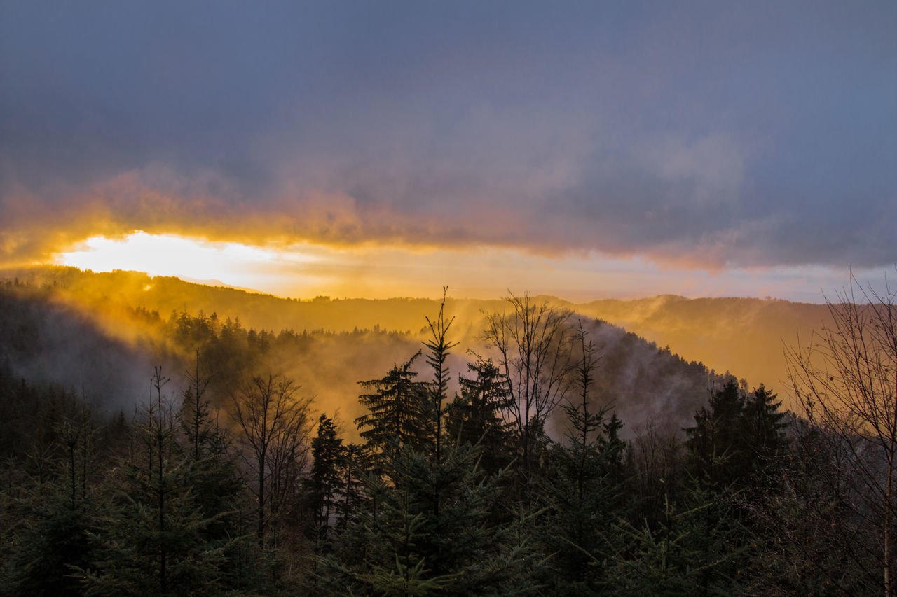 nature, beauty in nature, tranquil scene, tree, sunset, scenics, tranquility, mountain, sky, no people, landscape, outdoors, cloud - sky, forest fire, forest, day