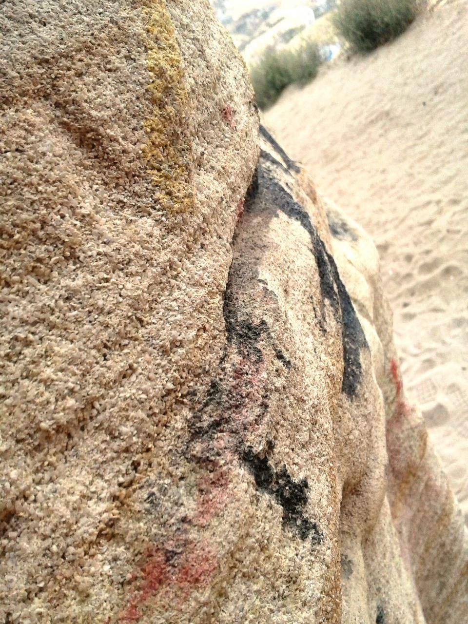 day, rock - object, rough, textured, no people, close-up, outdoors, animal themes, nature, mammal