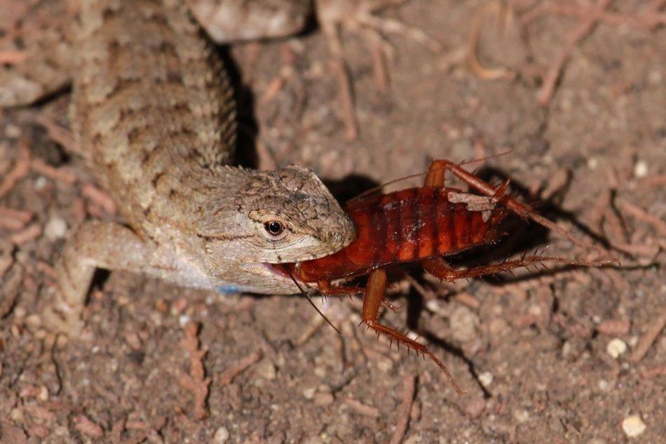 Beautiful stock photos of cockroach, Animal Hunting, Animal Themes, Animal Wildlife, Animals In The Wild