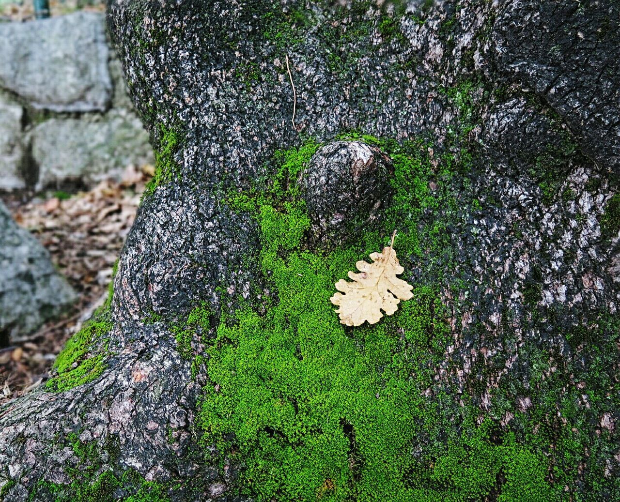 rock - object, moss, nature, no people, outdoors, day, lichen, beauty in nature, tree trunk, growth, close-up, fungus, animal themes, tree, toadstool, freshness