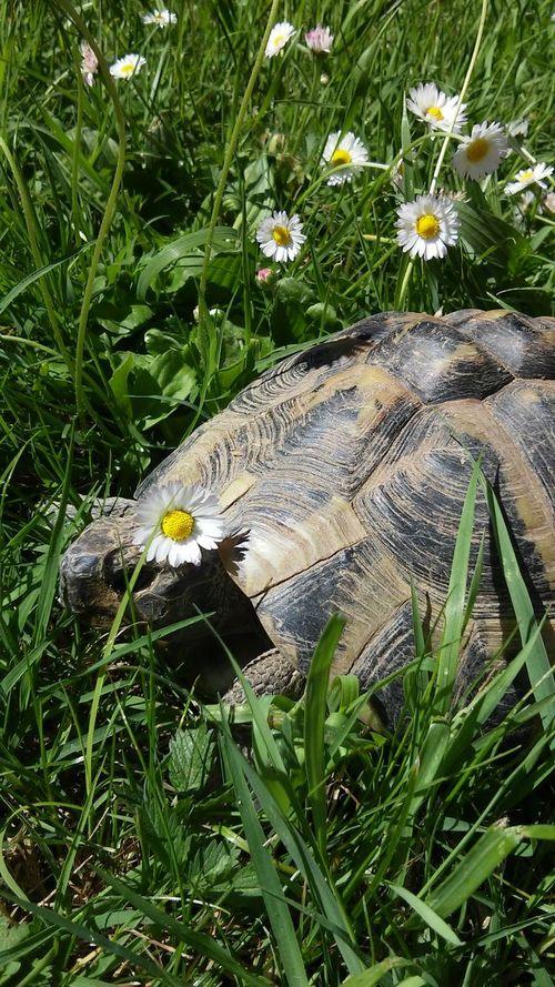 Ready For A New Year Pronta Per UN Nuovo Anno Tartaruga Naturlover Animal Photography Animal Portrait