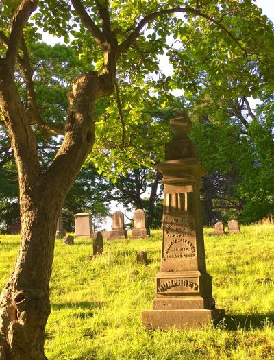 Landscape, cemetery, trees, afternoons,