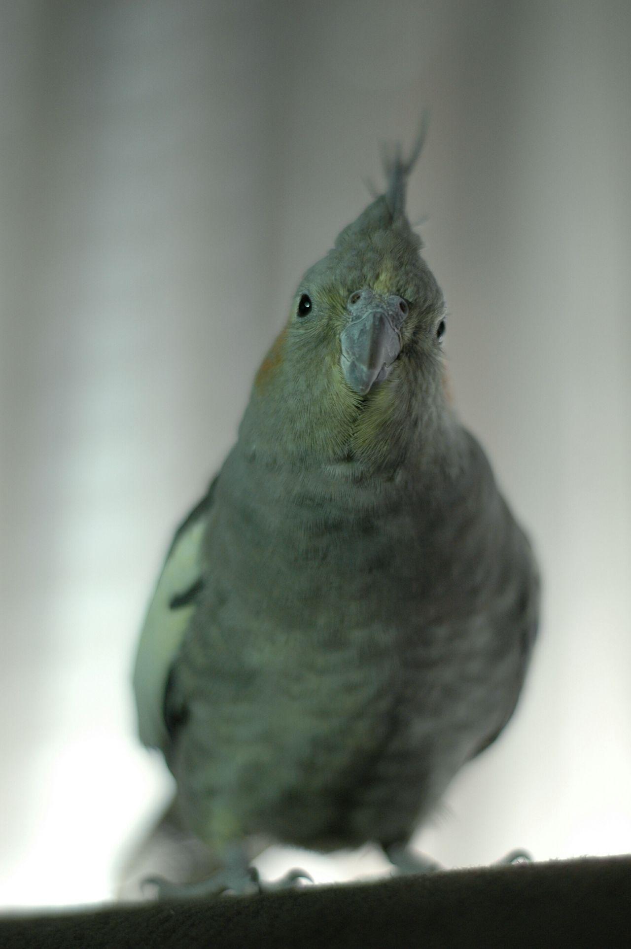 EyeEm Best Shots Mi Pollo Y Yo The Purist (no Edit, No Filter) Birds