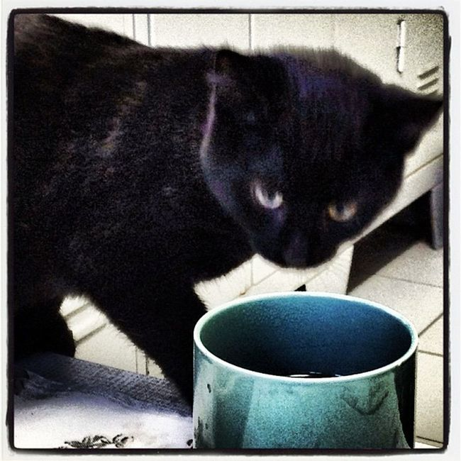 Sklfamily Cat Blacky  Katze