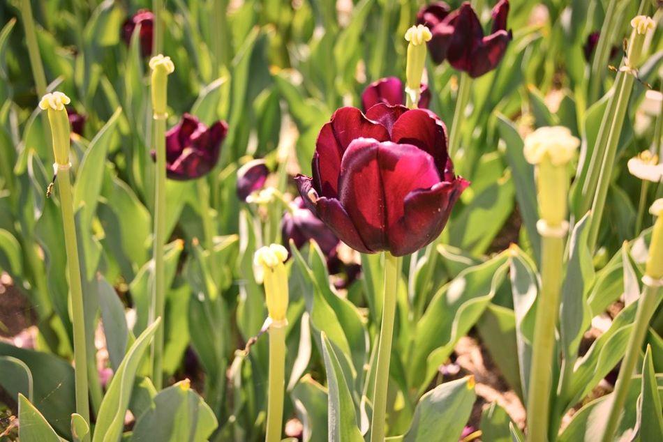The Flowers Series Madrid Flowers