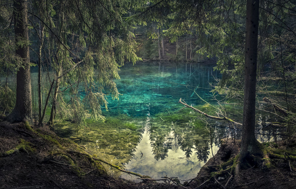 Scenic landscape with turquoise clear spring pond Kiikunlähde southern Finland Beauty In Nature Bright Clear Water Forest Green Lake Light Light And Shadow Lush Foliage Natural Nature No People Outdoors Pond Pure Scenics Source Spring Springtime Standing Water Tranquil Scene Transparent Tree Turquoise Water