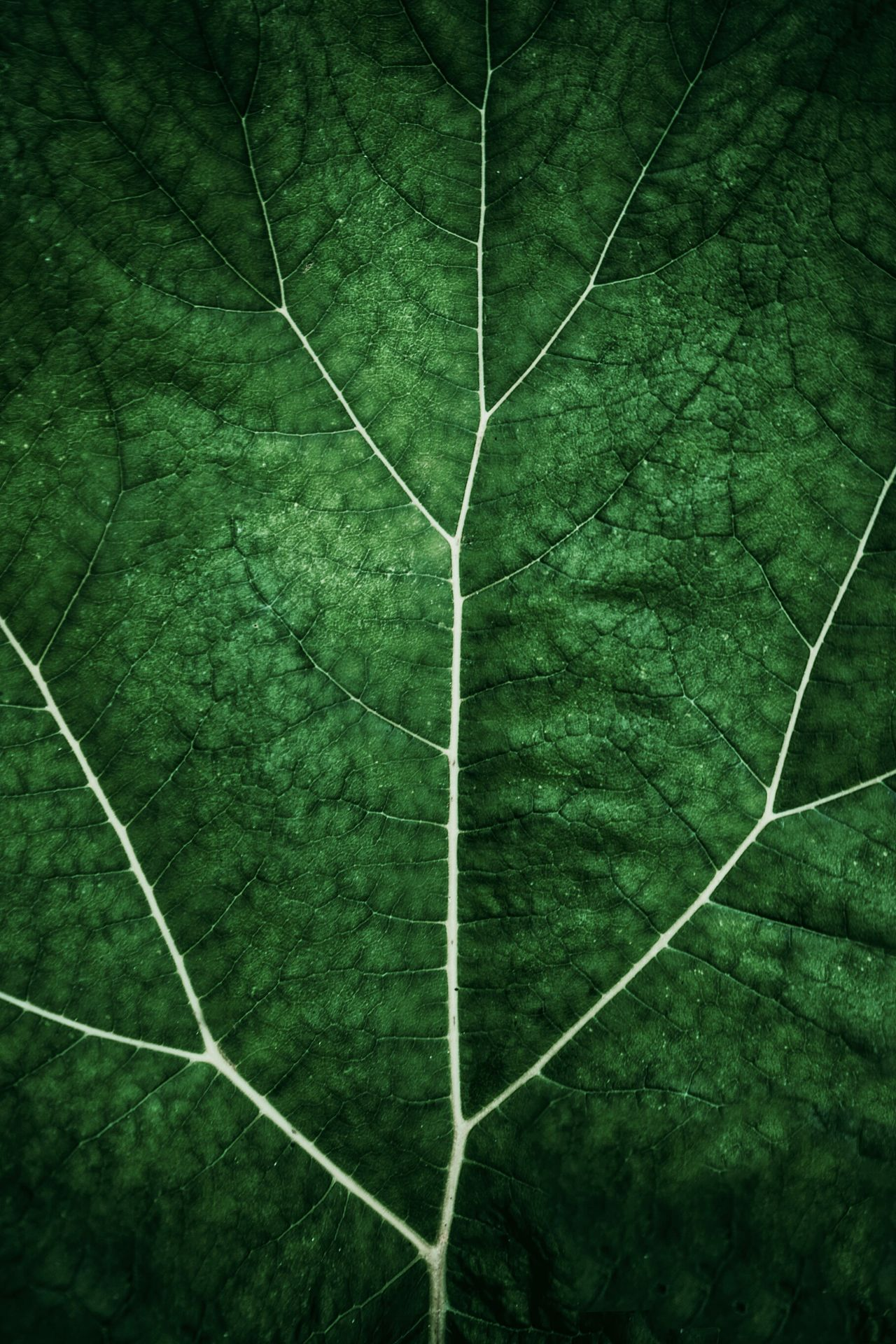 Green Color High Angle View Outdoors Nature No People Aerial View Close-up Full Frame The Week Of Eyeem Freshness Growth Leaf Beauty In Nature