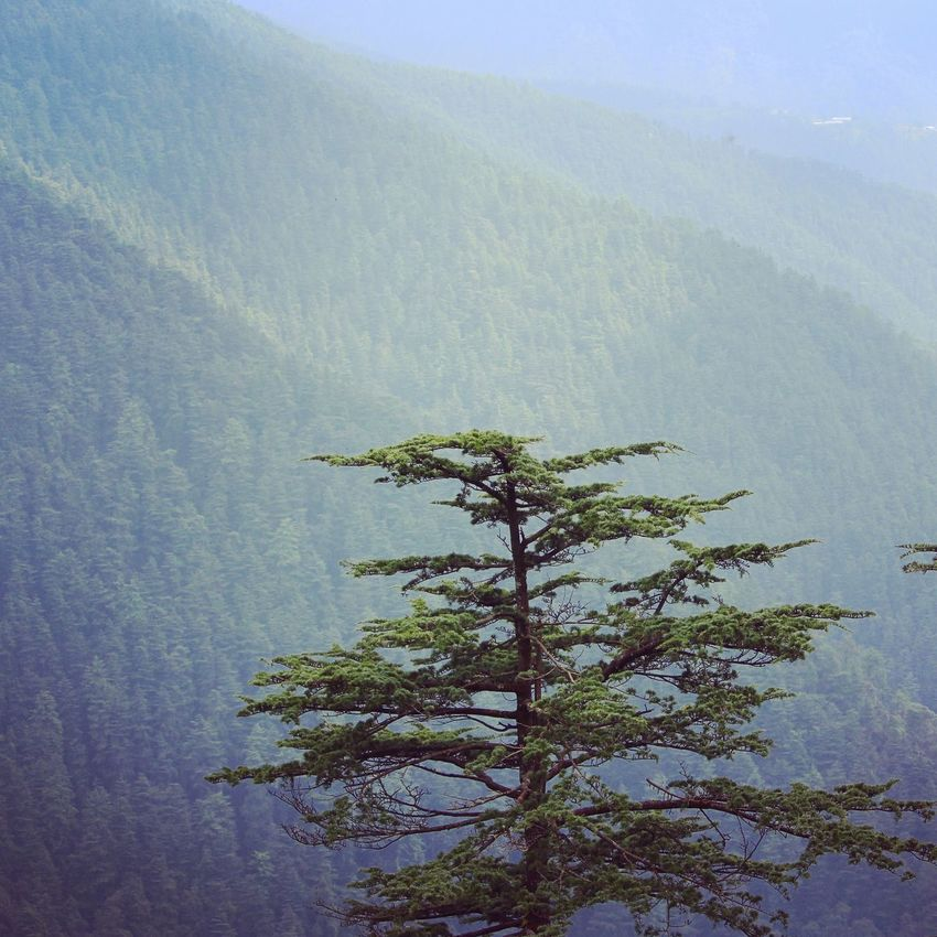 Tranquility in the lap of nature Tree Nature Beauty In Nature No People Landscape Scenics Mountain Day Nature_shooters Nature Eye Em Nature Lover EyeEm Shimla Greenvalley India