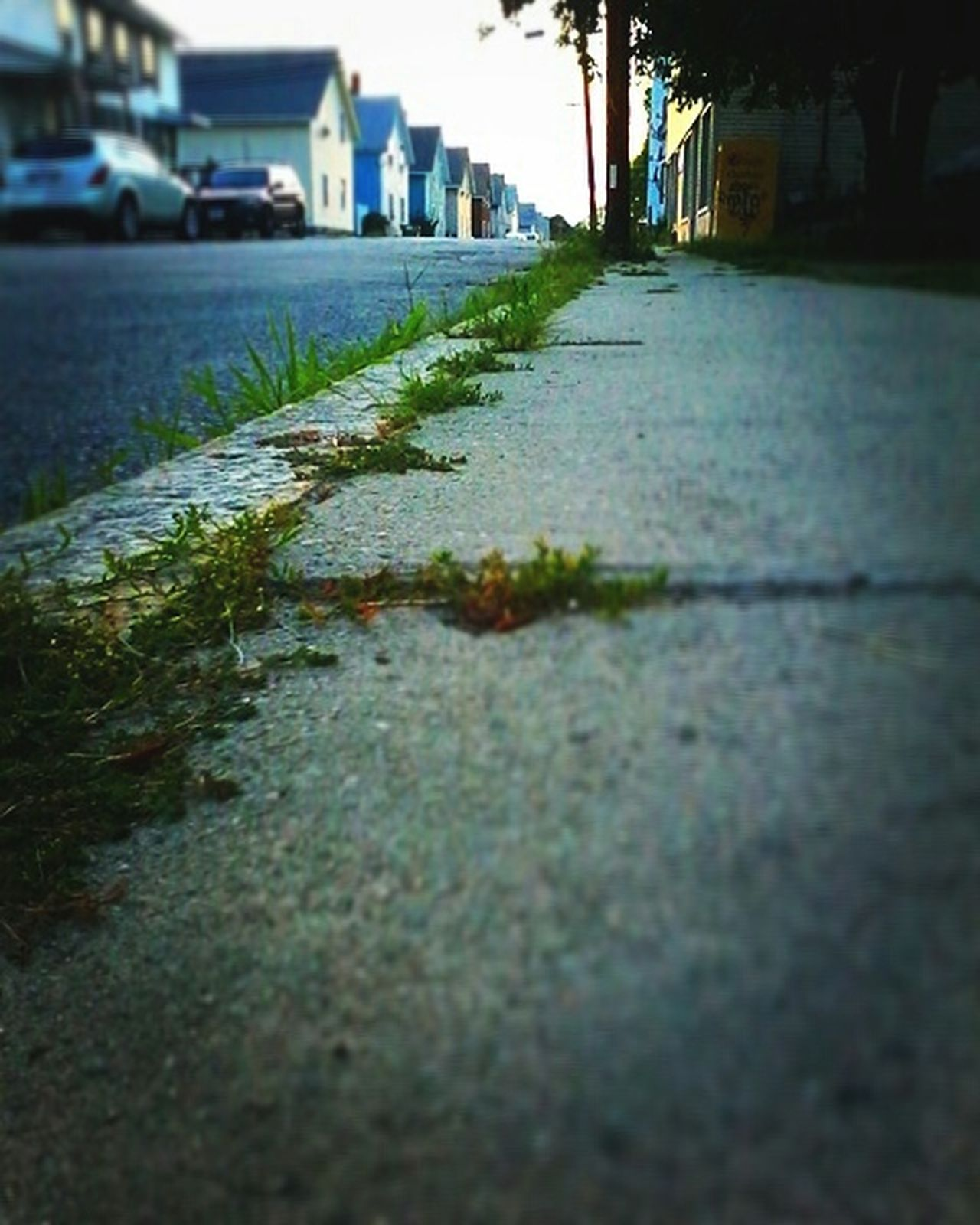 Surface Level Street Building Exterior Architecture Built Structure Road Selective Focus Long Clear Sky Footpath Plant Pathway Flower Day Outdoors Green Fragility Narrow Solitude The Way Forward Fresh On Eyeem  Composition Compo