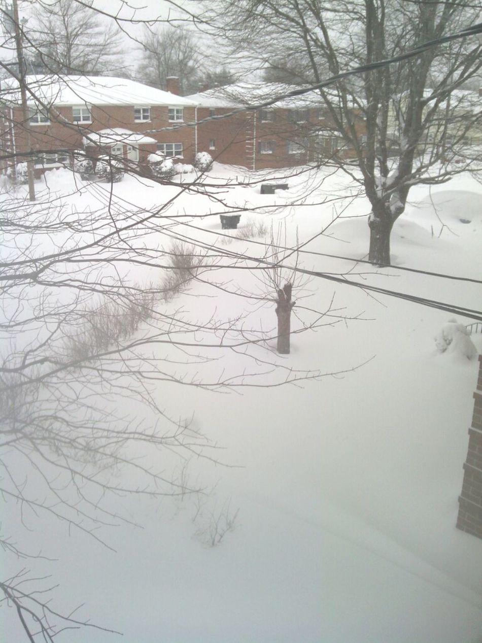 Blizzard Charlotte >.<