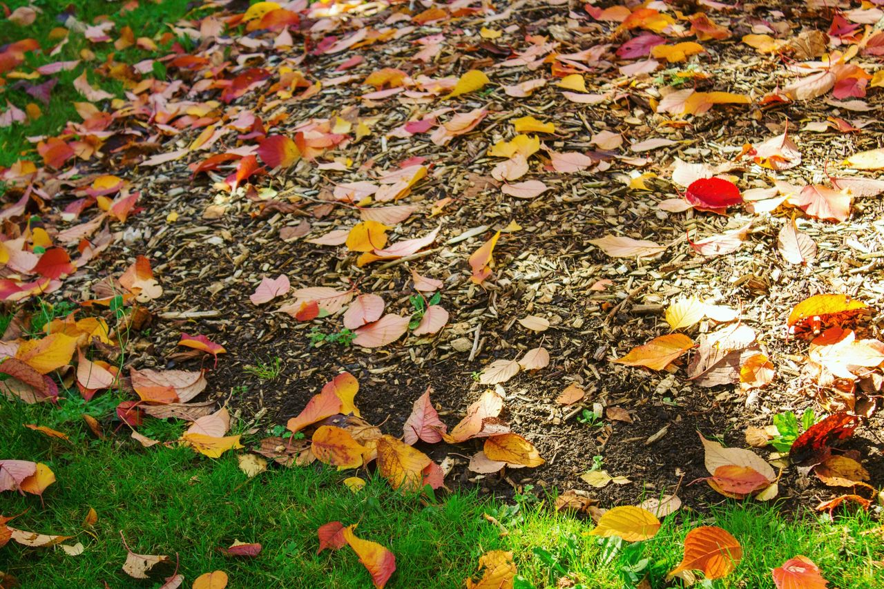 Everything is falling Leaf Autumn Change Dry Nature Fallen No People Leaves Fragility High Angle View Outdoors Close-up Backgrounds Maple Leaf Full Frame Fallen Leaf Fall Beauty In Nature Naturelovers Leafs Photography Leafs Autumn Leaves Autumn Nature Photography Nature_collection