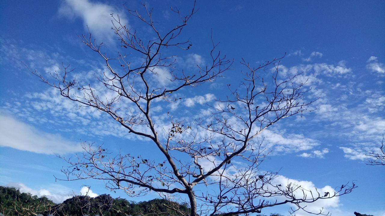 sky, cloud - sky, bare tree, nature, branch, low angle view, tree, day, beauty in nature, no people, outdoors, blue