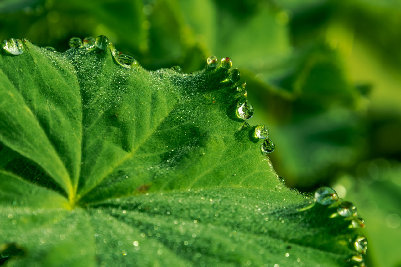 Close-Up Of Droplets On Plant