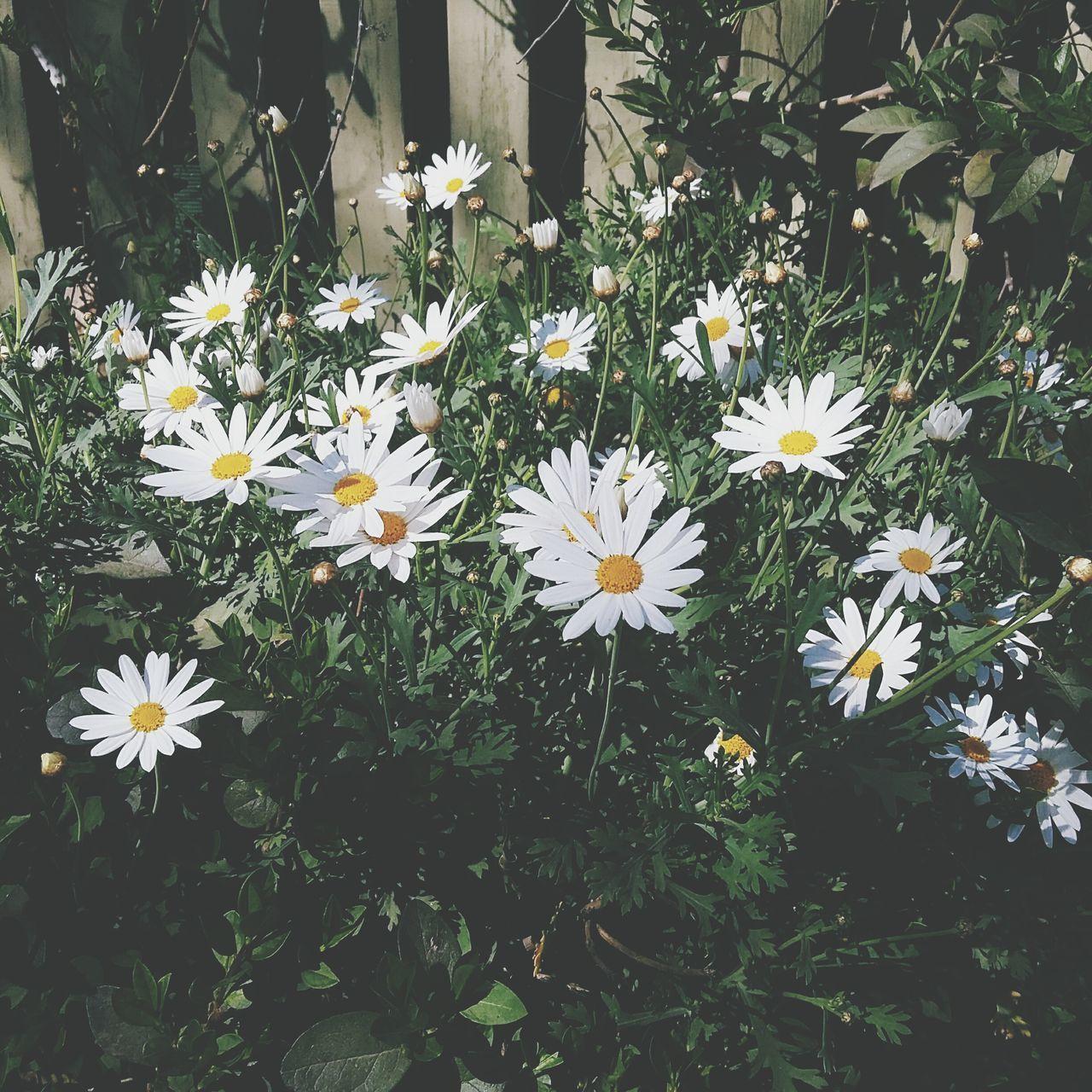 Flower Santiago Chile Lunes