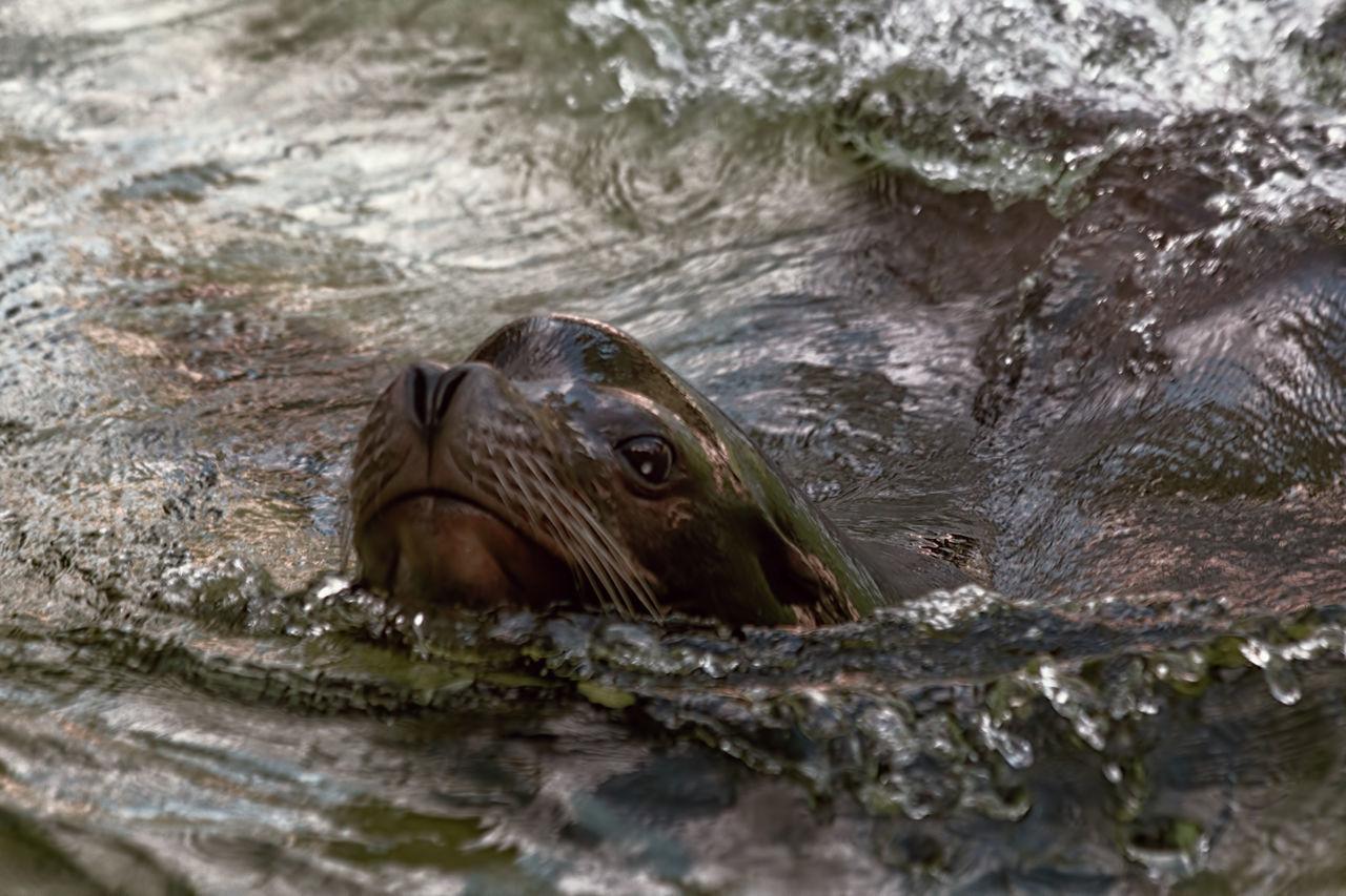 Hello Animal Animal Head  Animal Themes Beauty In Nature Close-up Mammal Nature Seal Wildlife