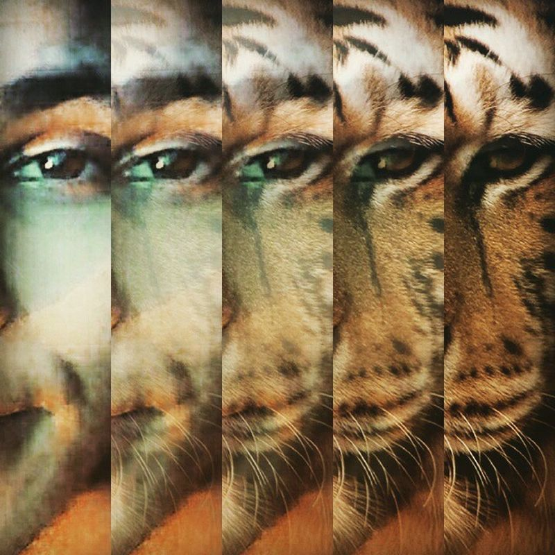 You must fight just to keep them alive It's the eye of the tiger It's the thrill of the fight Rising up to the challenge of our rival And the last known survivor Stalks his prey in the night And he's watching us all with the eye of the tiger Eye Eyeofthetiger Survivor Dean metallicar baby supernaturalfan music classicrock