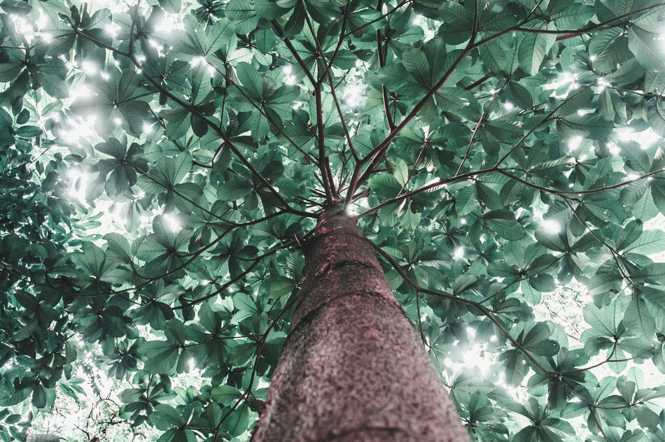 Nature Tree Growth Low Angle View Beauty In Nature No People Green Color Tranquility Outdoors Day Branch EyeEm Indonesia Freshness