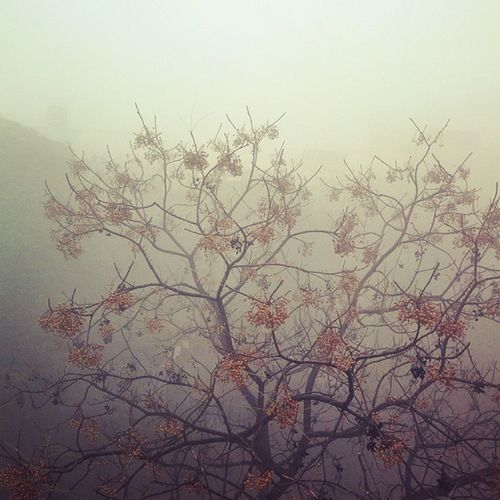 Delhi Fog Scenes 2.0 Delhi Delhiuniversity NorthCampus Wintermornings Winter Cold Tree Leaves Yellow