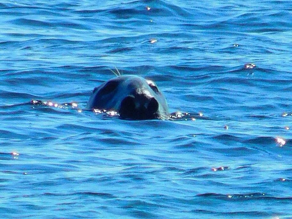 Nature_collection Outside Photography Massachusetts Sealife Streamzoofamily Wildlife & Nature July 2016 New England  Outdoor Pictures Seaside Seals Water_collection