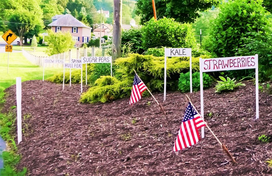 Culture Day Farm Markets Flag Growth Information Information Sign Multi Colored Nature No People Outdoors Patriotism Pole Red Sky Tree