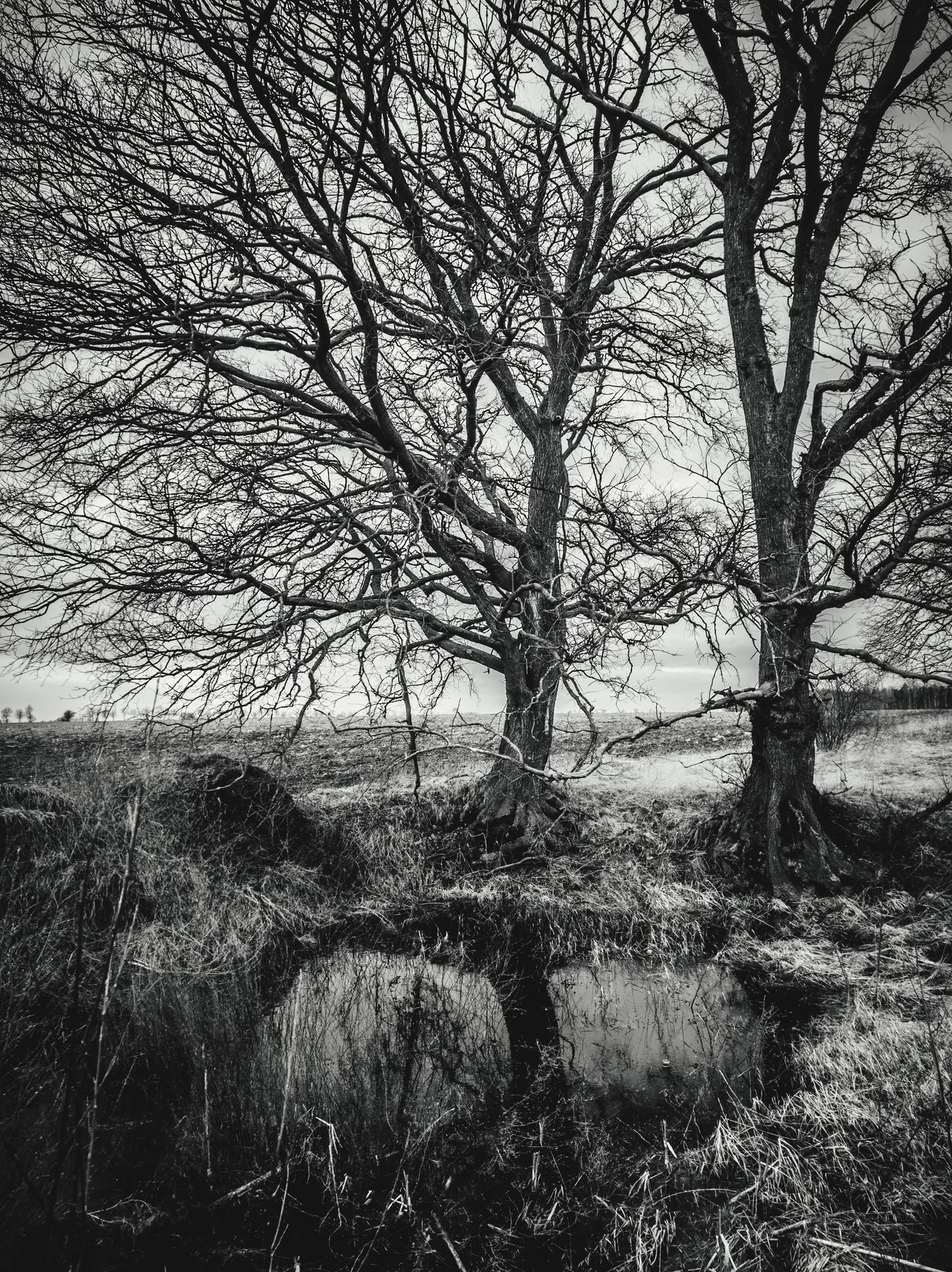 Tree Nature No People Outdoors Beauty In Nature Sky Water Blackandwhite Poland HuaweiP9 Www.tomaszkucharski.com.pl Polishphotographer Huawei Bare Tree
