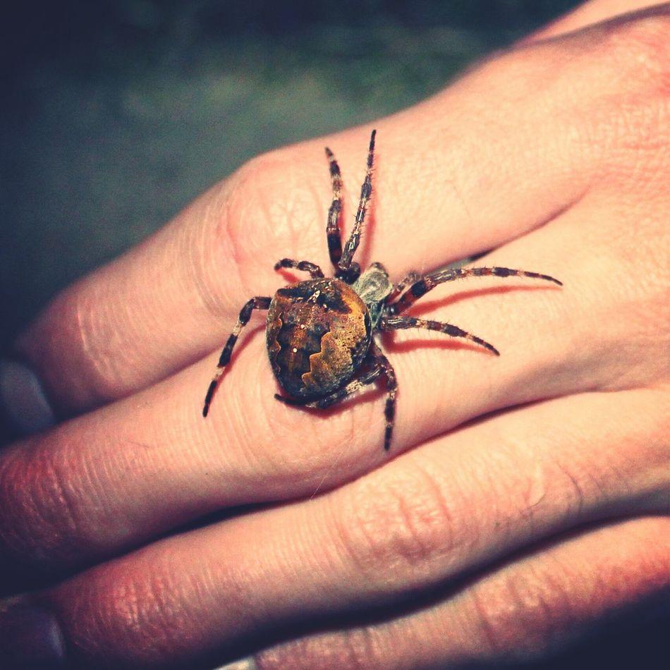 Summer Spider Belarus лето паук беларусь