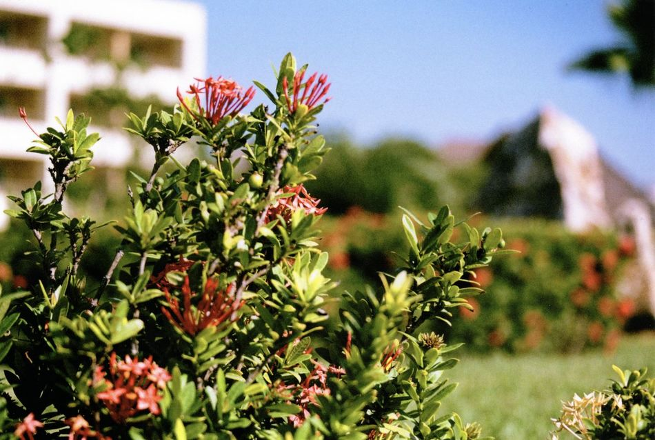 35mm Film Beauty In Nature Close-up Day Film Film Photography Flower Flower Head Focus On Foreground Fragility Freshness Green Color Growth Leaf Minolta Minolta Maxxum Nature No People Outdoors Plant Sky Tree
