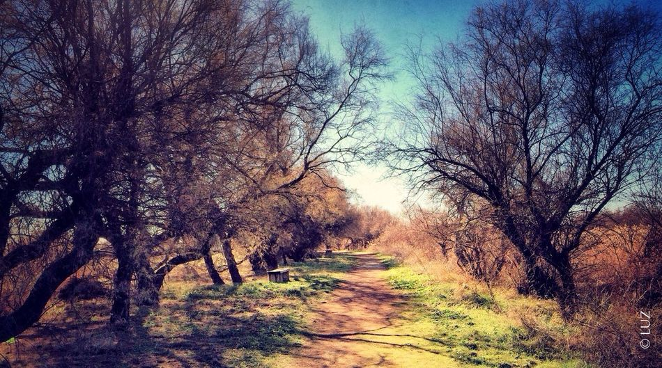 Entre tarays IPhoneography Landscape Nature SPAIN