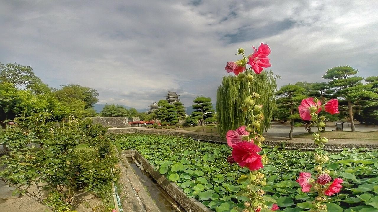 Sky Flower Plant Nature Tree Beauty In Nature Freshness Val  LG  G5se Lgg5se Japan Japan Scenery Japanese Garden Castle