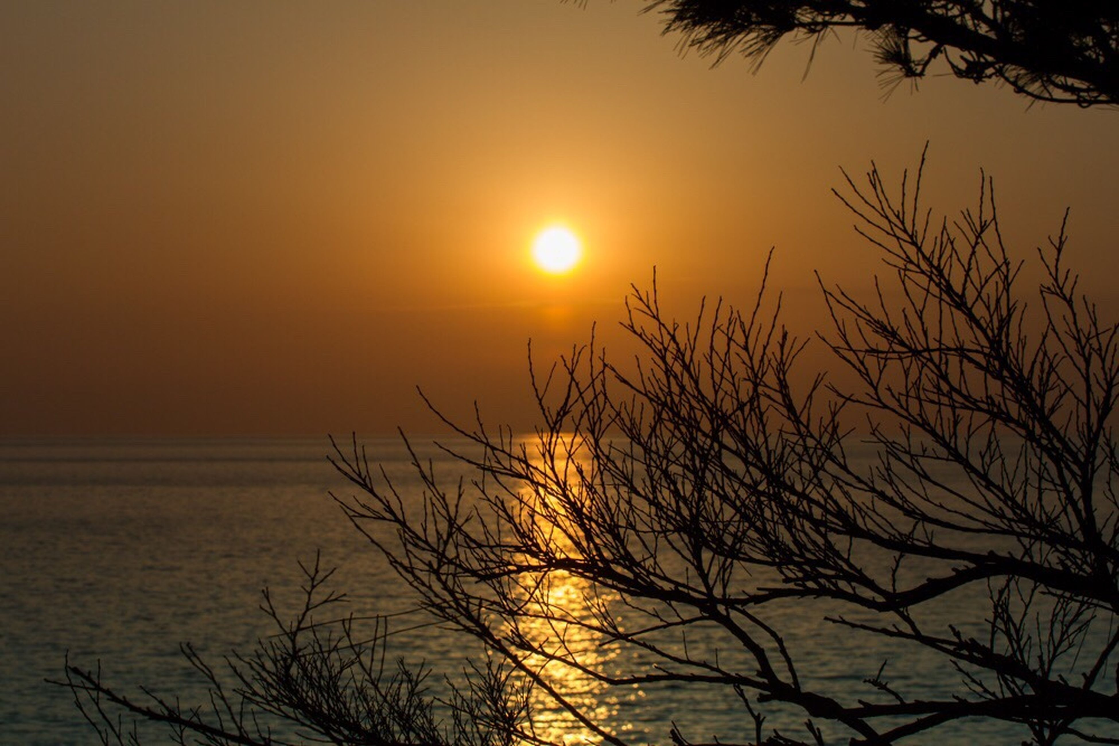 sun, sunset, scenics, beauty in nature, tranquil scene, branch, silhouette, orange color, tranquility, idyllic, tree, sea, bare tree, water, majestic, nature, vibrant color, sky, glowing, outdoors, romantic sky, non-urban scene, back lit, dramatic sky, calm, high section, atmosphere, moody sky, vacations, no people