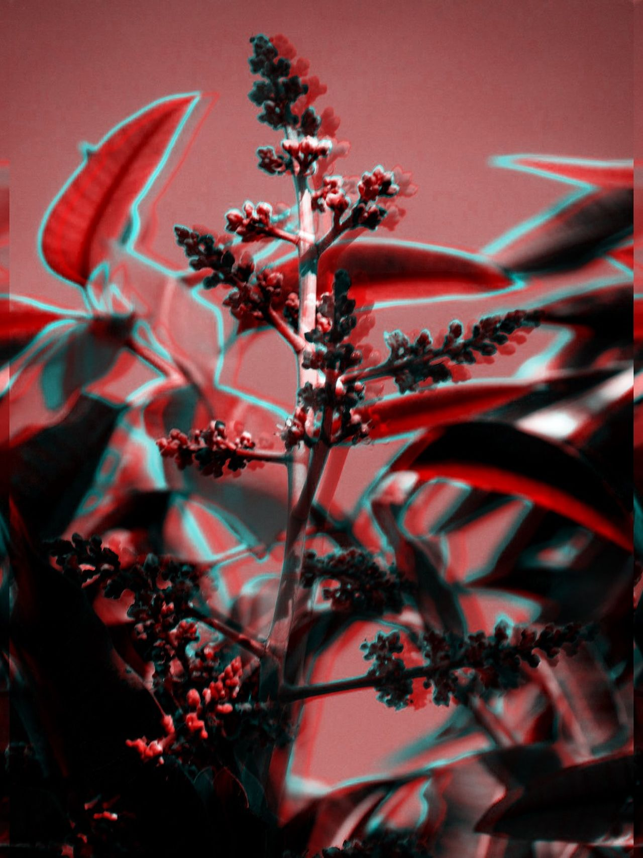 Life goes on!! (Collection) 3D Art 3d Collection 3D Composition 3D Effect 3D Photo 3Dart Black Black & White Black And White Blakck And White Blue Leaves Mango Flowers Mango Tree No People Outdoors Outdoos Red White