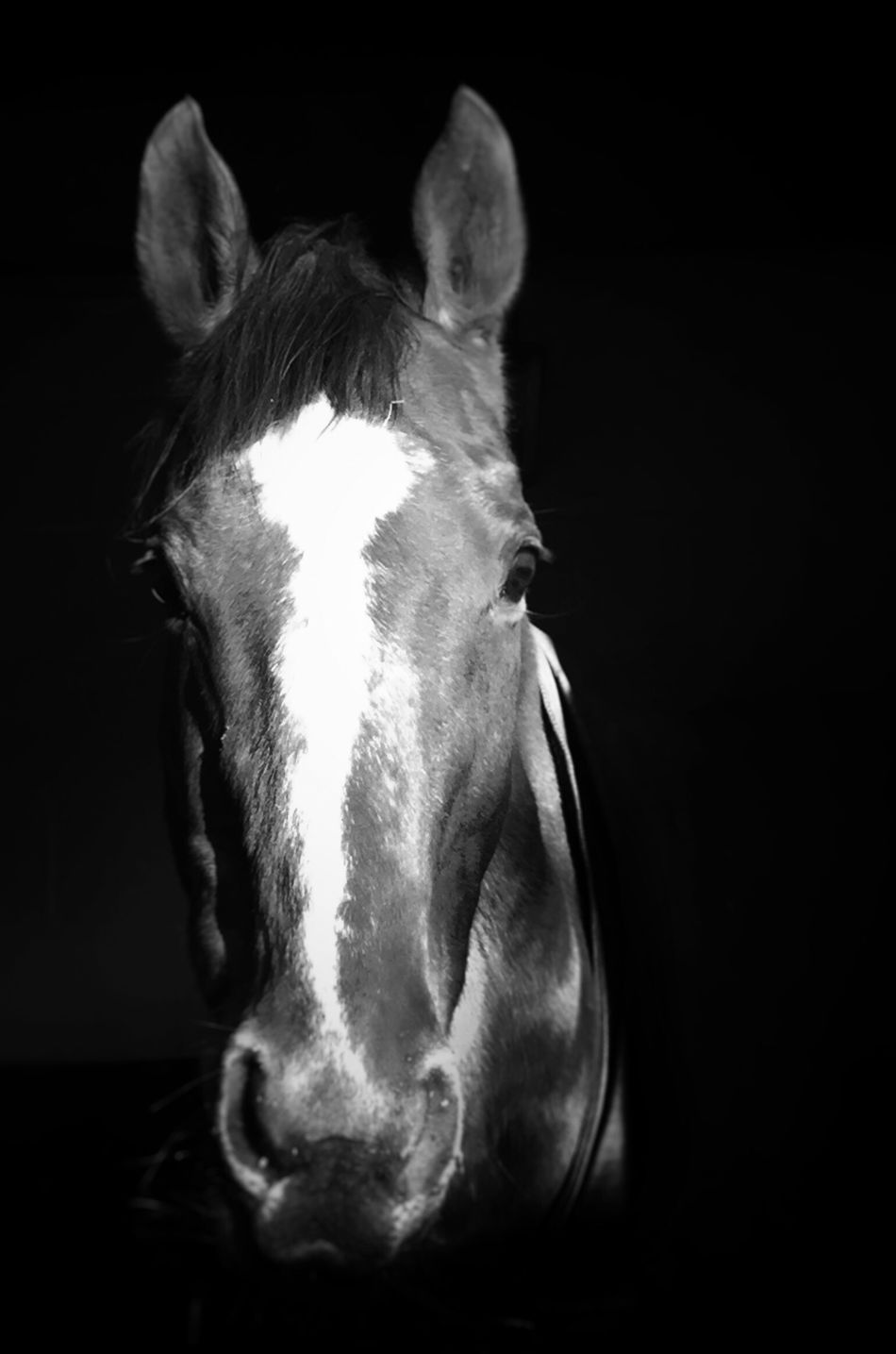 One Animal Pets Horse Exracehorse Black And White Cold Winter ❄⛄ Equestrian Love ♥ No People Pretty♡ Freshair Working Outdoors Equine Photography Horselife