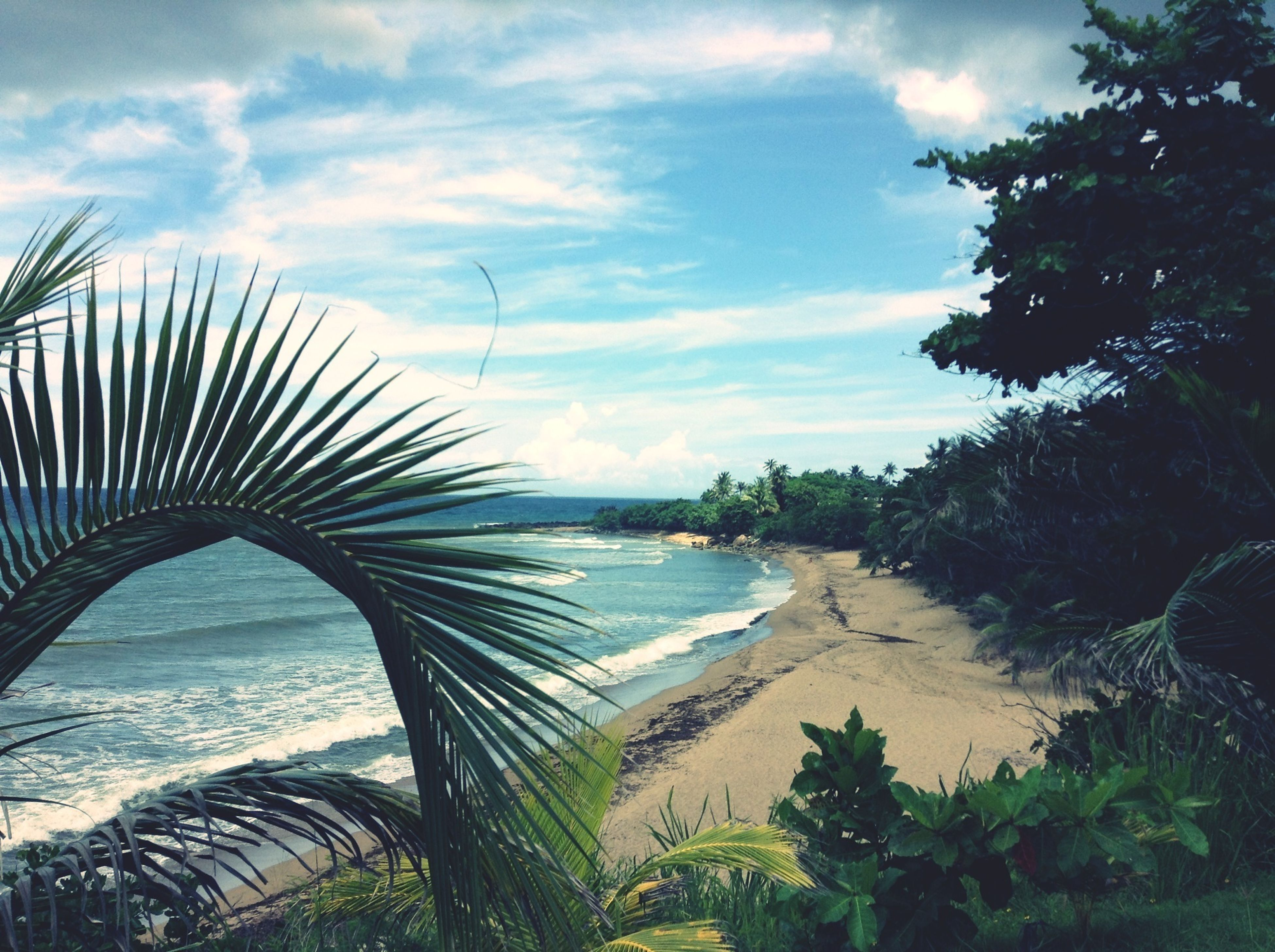 water, sea, palm tree, sky, beach, tranquility, tranquil scene, beauty in nature, scenics, tree, nature, shore, sand, horizon over water, cloud - sky, growth, cloud, idyllic, day, plant