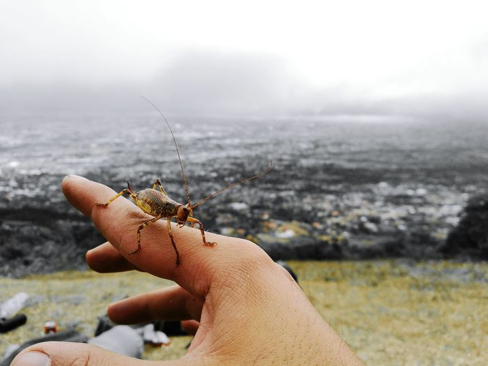 Grasshopper Focus On Foreground Human Body Part One Animal Animal Wildlife Social Issues Nature Human Hand Outdoors Landscape Beauty In Nature Break The Mold