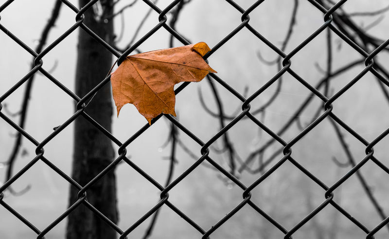 Berlin Berlin Photography Chainlink Fence City City Life Close-up Day Fence Focus On Foreground Keycolor Leaf No People Protection Trapped GERMANY🇩🇪DEUTSCHERLAND@ EyeEm Gallery EyeEm Best Shots