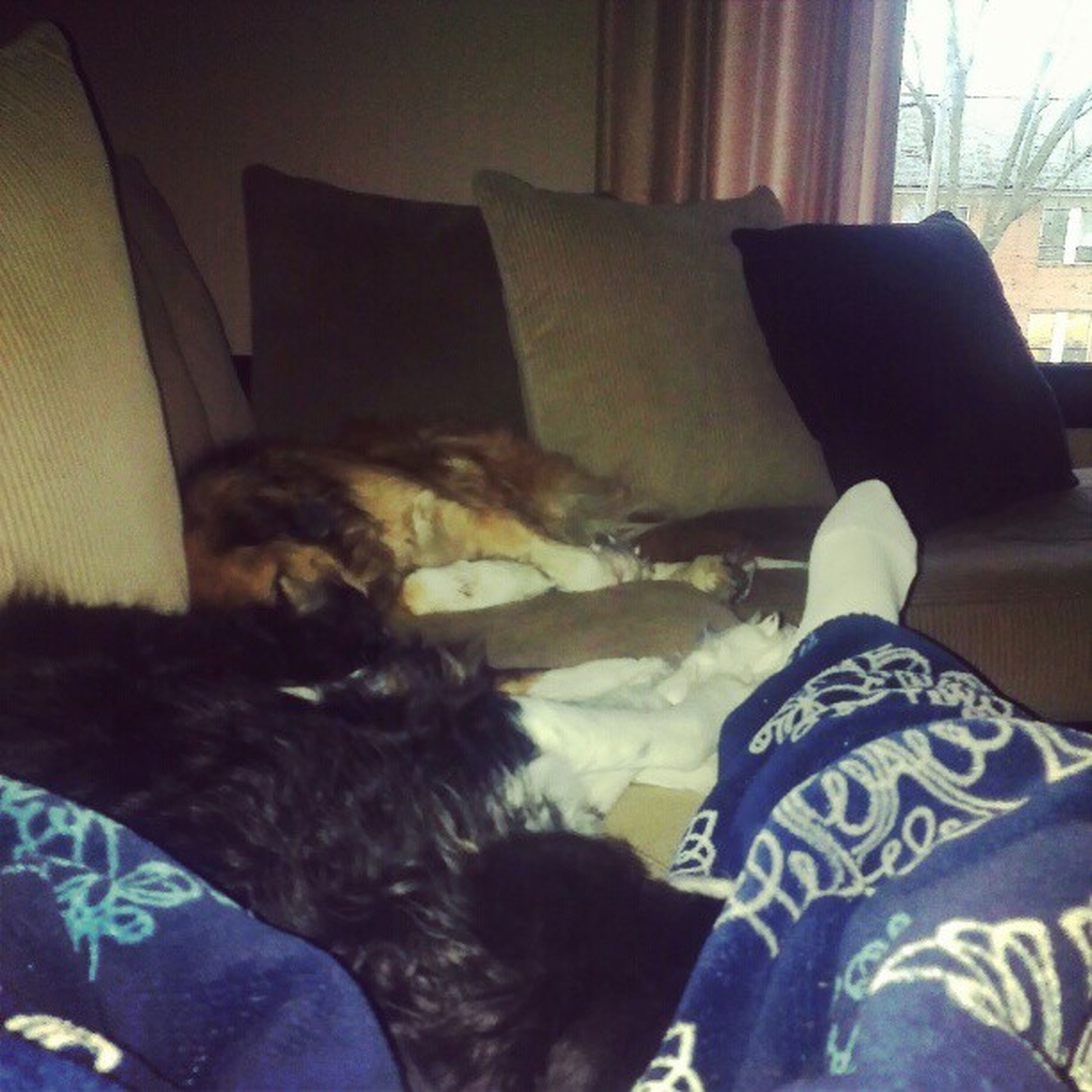 indoors, bed, relaxation, resting, bedroom, sofa, lying down, home interior, sleeping, comfortable, domestic animals, pillow, pets, sitting, blanket, dog, one animal, animal themes