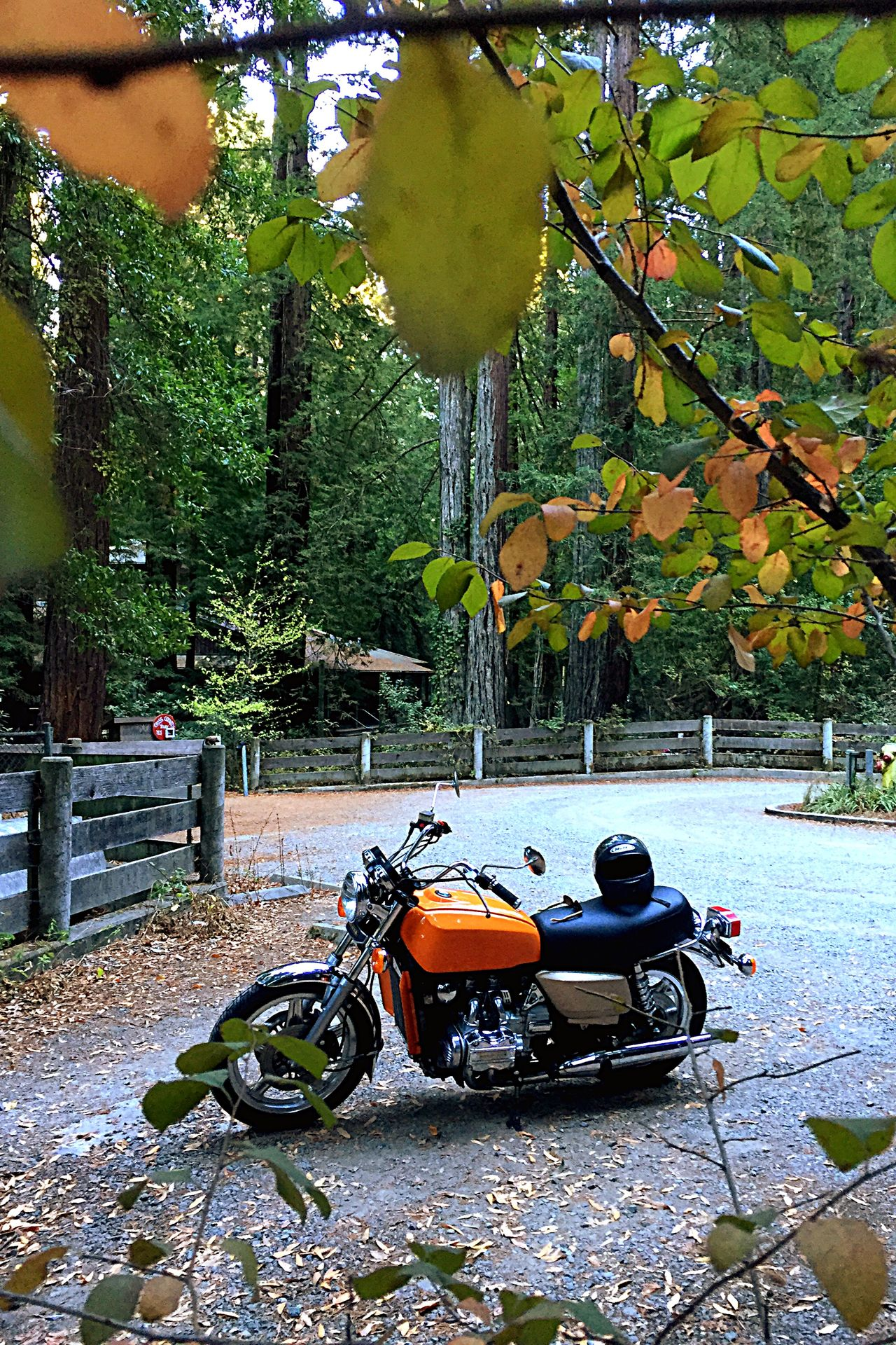"Had to go pick up the freshly restored 1979 GL1000 today. Because I only have a permit, I ""had to"" drive back roads all the way from Fairfield, Ca... This is Pinehurst road between Moraga and Oakland... It's like a miniature Muir Woods in there and the temp dropped more than ten degrees the moment I entered it..."