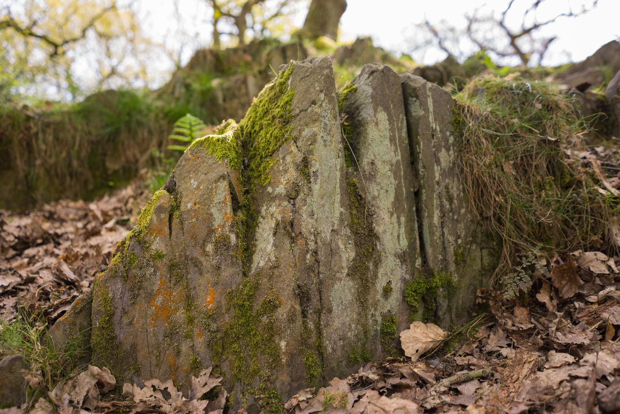 no people, nature, rock - object, green color, day, outdoors, plant, lichen, close-up, tree, beauty in nature, sky