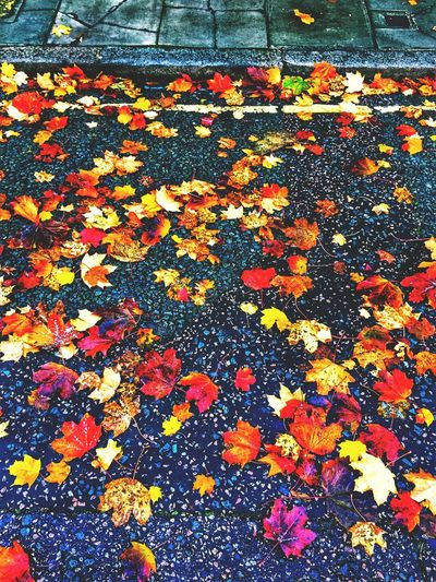 november Autumn Change Leaf City Autumn London Dalston November