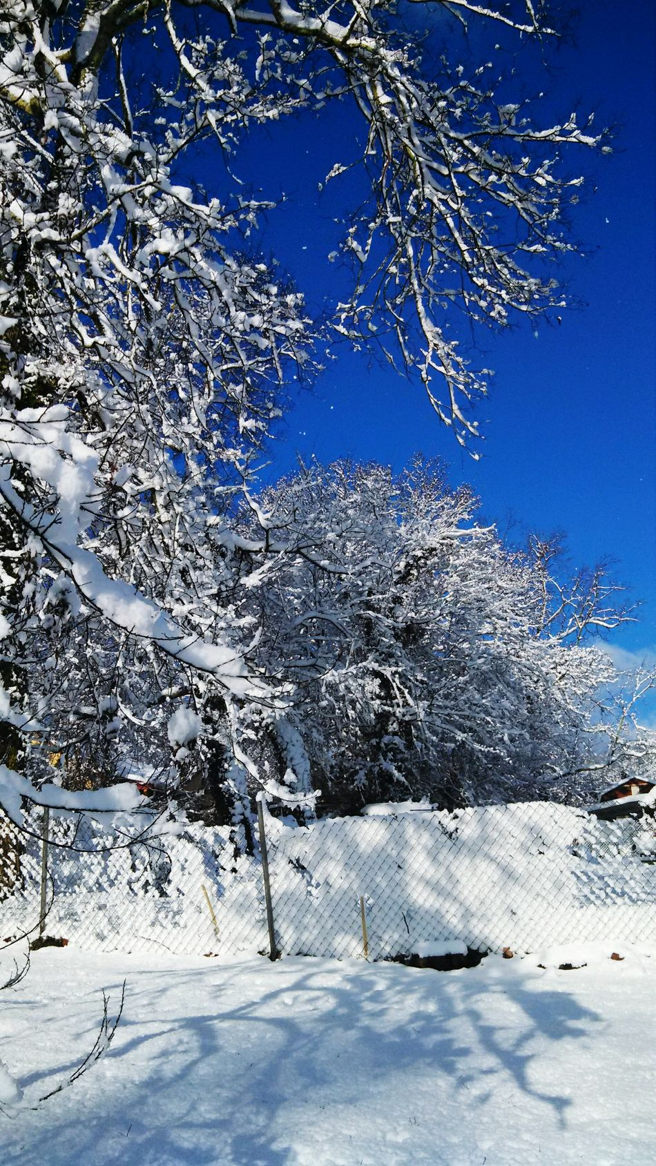Snow!! Feburary 2014!!