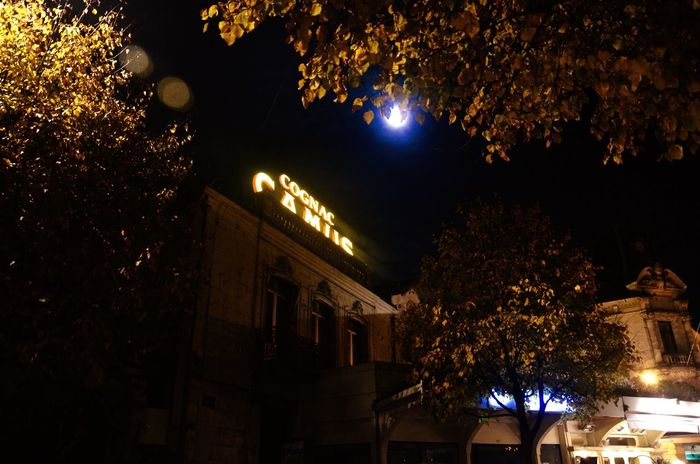 Tree Night Illuminated Architecture Building Exterior Moon Sky Built Structure Christmas Outdoors Branch Nature Cognac Camus