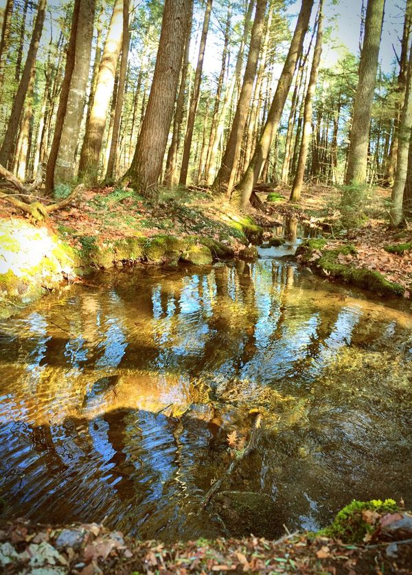 All you need Water Water_collection In The Forest Forest Forestwalk Nature Nature_collection Trees Tree_collection  New England  Massachusetts Explore New England Share Your Adventure