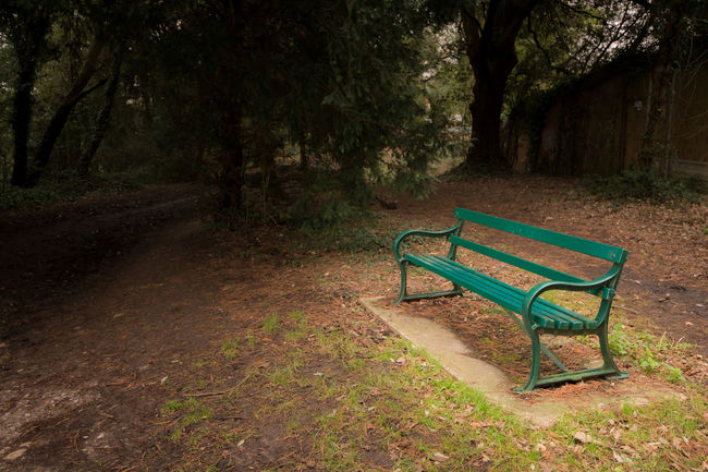 There was a time when you saw them resting at this bench passing the day..... Absence Autumn Beloved Bench Dirty Empty Footpath Grass Narrow Park Park - Man Made Space Park Bench Relaxation Rest Safe Shadow Sitting Tree Tree Trunk