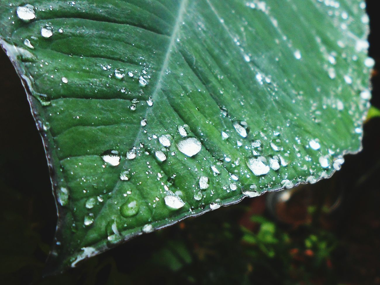 Rains_green_beauty!