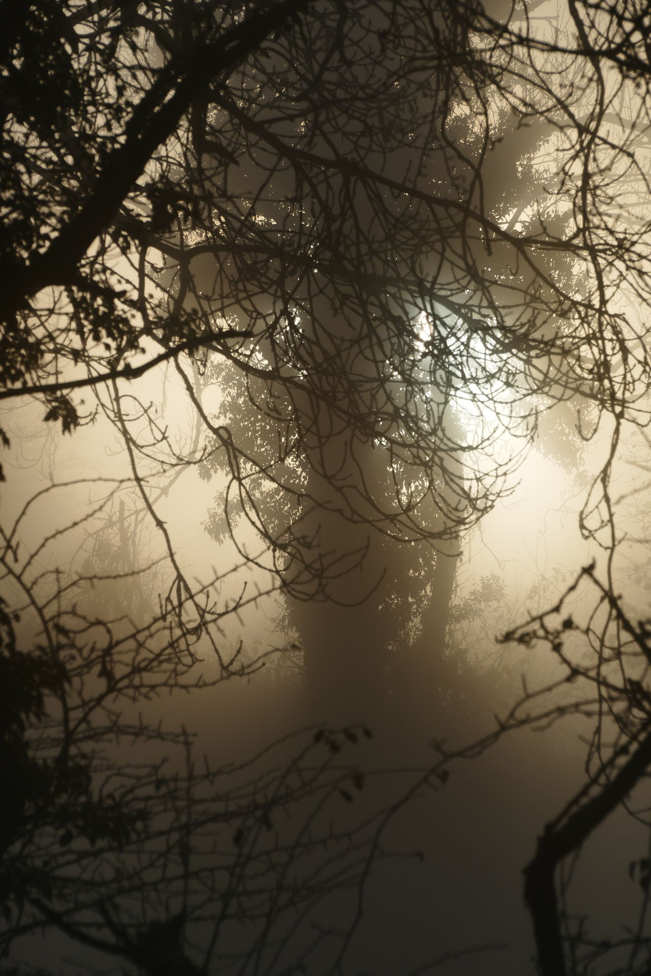 Foggy day.. Autumn Bare Tree Beauty In Nature Branch Close-up Day Dream States Ethereal Fog Foggy Foggy Weather Growth Low Angle View Nature No People Outdoors Silhouette Silhouette Silhouette_collection Sky Softness Sunset Tranquility Tree