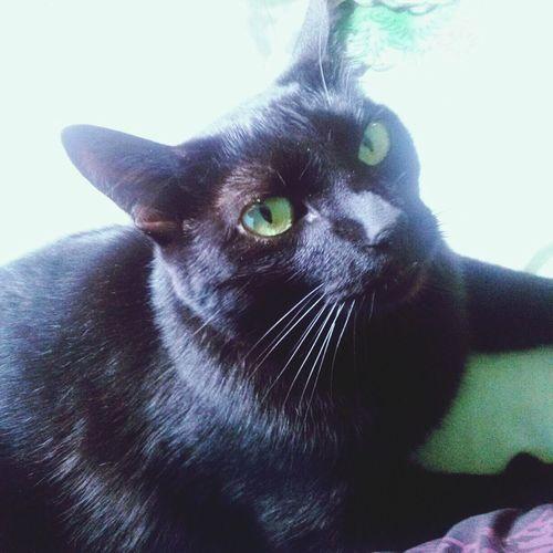 Cat Lovers Green Eyes