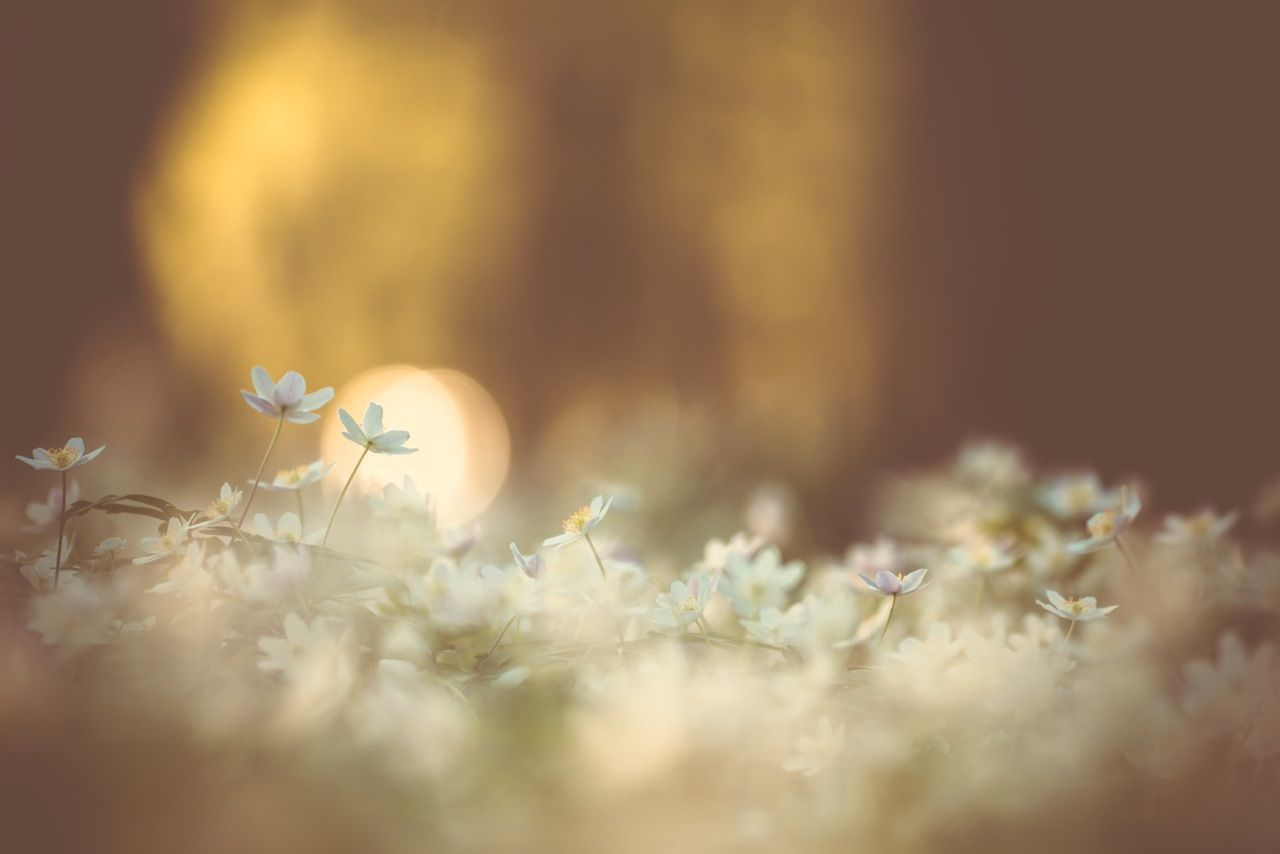 Beautiful stock photos of meadow, Backgrounds, Flower, Meadow, Nature