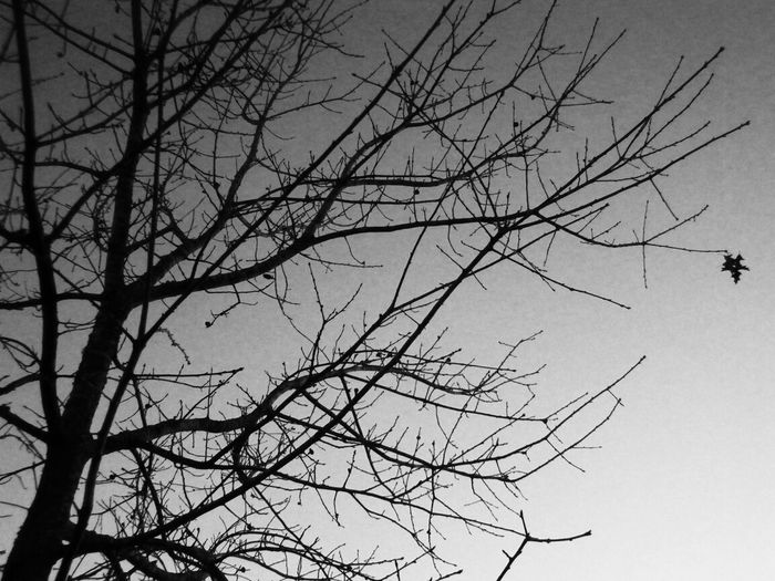 """""""One is the loneliest number that you'll ever do..."""" TheVille Lyrical Madness Nature Trees"""